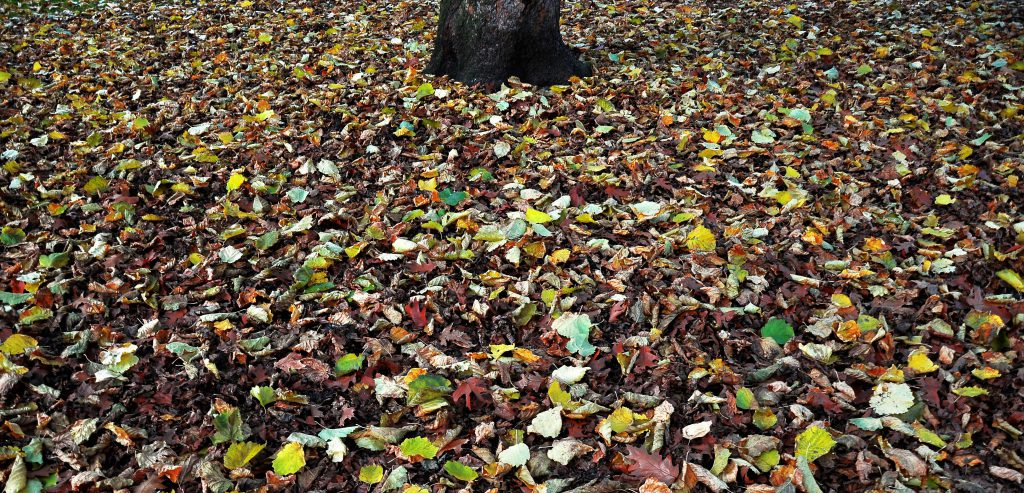 Photo of a lawn covered in colorful leaves
